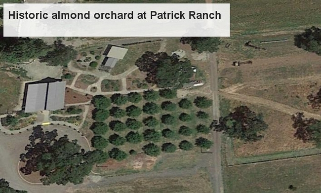 Google Earth image of historic almond orchard