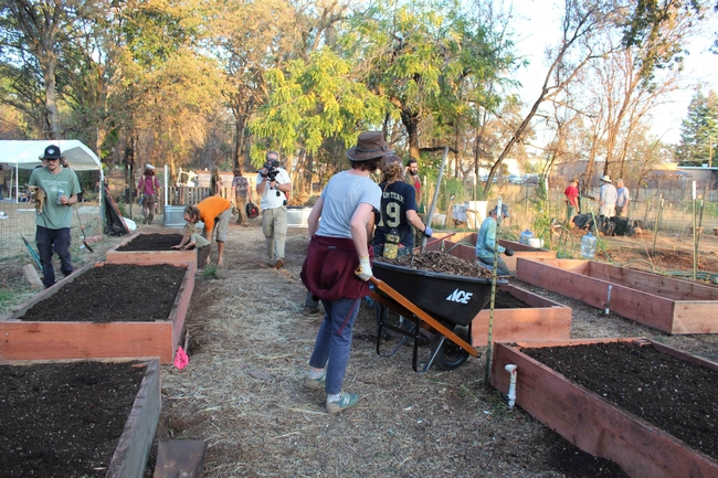 Volunteers fill new beds with soil at the Paradise Community Garden
