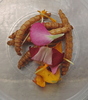 Mealworms are the delicacy in this dish.