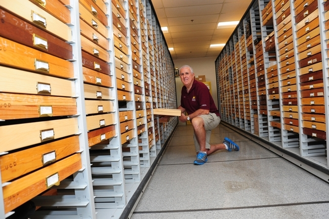Entomologist Jeff Smith with part of the 400,000 butterfly and moth collection at the Bohart Museum of Entomology. (Photo by Kathy Keatley Garvey)