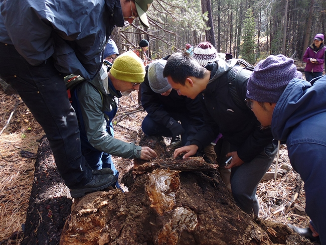 Ant specialist/professor Phil Ward (left)and students explore a fallen tree during the faculty/student retreat. (Photo by Sandy Olkowski)