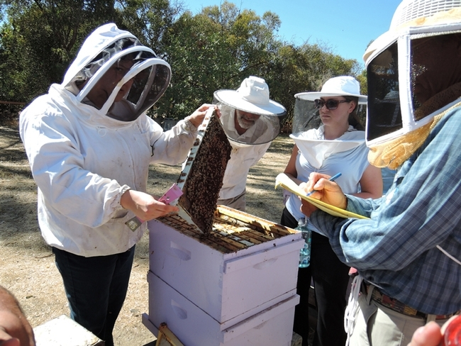 Extension apiculturist Elina Lastro Niño (far left) teaching a bee course at the Harry H. Laidlaw Jr. Honey Bee Research Facility. (Photo by Kathy Keatley Garvey)
