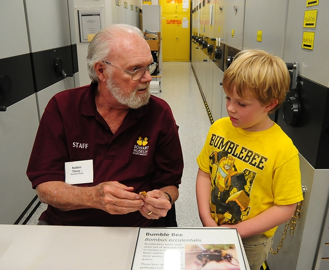 Robbin Thorp, distinguished emeritus professor of entomology at UC Davis, shows a male Valley carpenter bee at the Bohart Museum to 2017 UC Davis Picnic Day visitor Adne Burruss of Irvine. (Photo by Kathy Keatley Garvey)