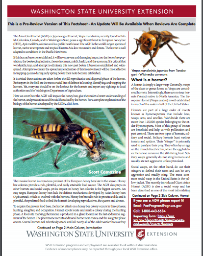 Washington State University Extension has published a fact sheet on the Asian giant hornet. It can be downloaded at  https://bit.ly/2SA3TxS.