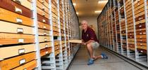 Entomologist Jeff Smith curates the 500,000 Lepidoptera (butterflies and moths) collection at the Bohart Museum of Entomology, UC Davis. (Photo by Kathy Keatley Garvey) for Entomology & Nematology News Blog