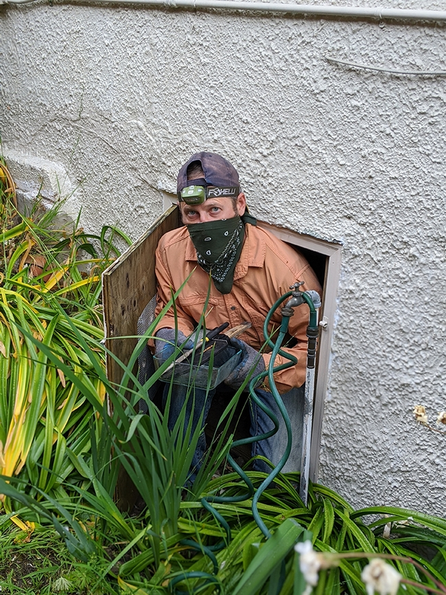 Andrew Sutherland emerges from a crawl space / subarea under a residential structure in Oakland during a subterranean termite monitoring and collection visit. (Photo by Casey Hubble)