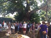 Food bloggers gather for lunch under an ancient sycamore tree at the Elliott Pear Farm.