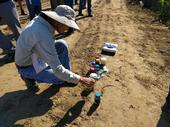 UC Cooperative Extension advisor Gene Miyao looks at biofertilizer in its various stages, from raw waste to fertilizer