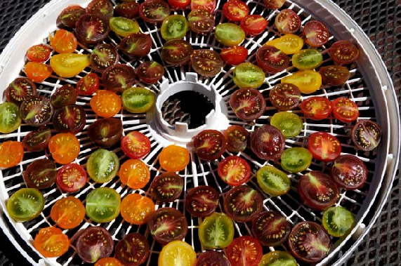 Colorful tray of cherry tomatoes, ready to dehydrate. Photo by Summer Brasuel
