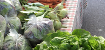 The Market Match program makes high quality produce more accessible. for Food Blog Blog