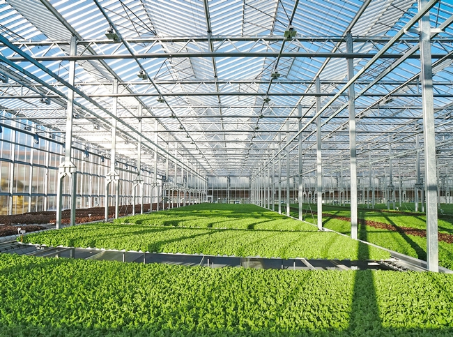 Gotham Greens is building a state-of-the-art greenhouse near UC Davis and partnering with to advance research and innovation in indoor agriculture, greenhouse technology and urban agriculture. Photo courtesy of Gotham Greens