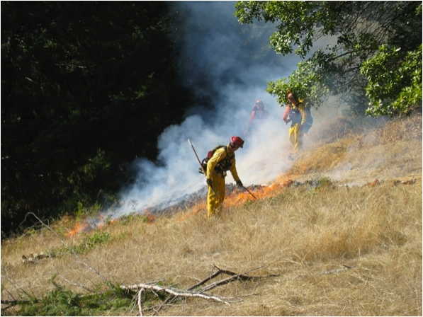 Ignition of a prescribed burn in Humboldt County to reduce conifer encroachment into a natural prairie (Y. Valachovic photo).