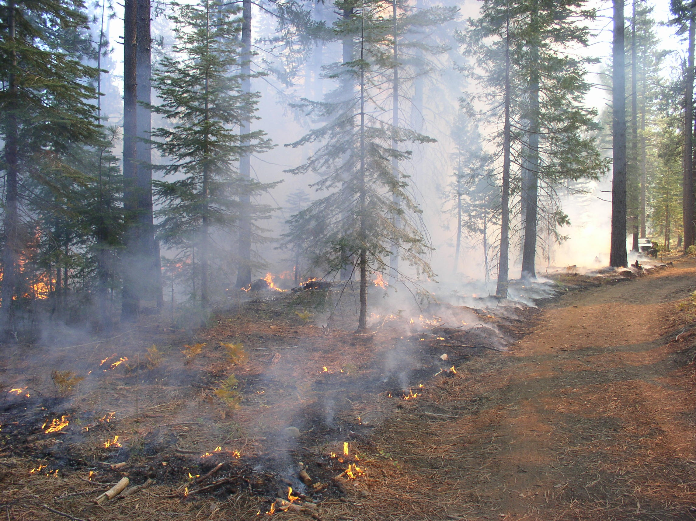 a study on forest fire causes and effects Forest fire and biological diversity  ecosystem effects of fire forest fires have many implications for fires can cause the displacement of territorial.