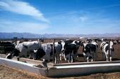 California's greatest conservation tillage implementation gains are being made on dairies.