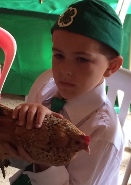 boy with chicken