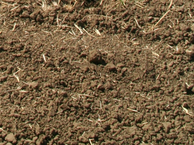 Biotic soil resulting from conservation agriculture practices.