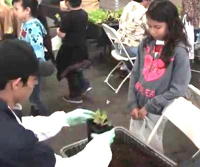 Students at the 2014 Fresno Farm and Nutrition Day planting leaf lettuce to take home and grow.