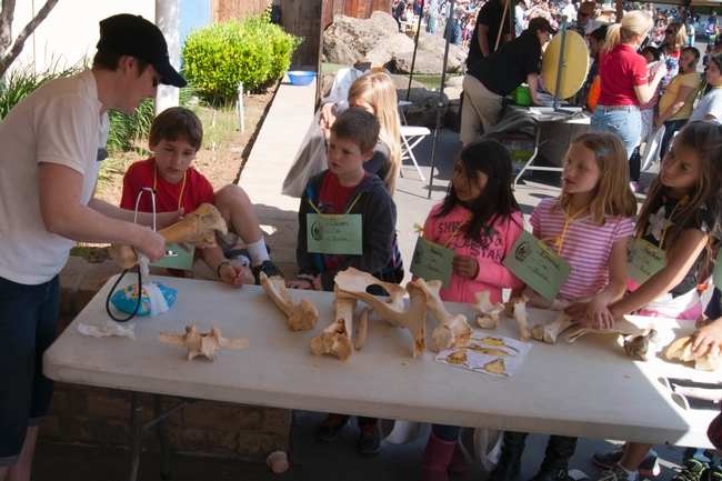 Chidren at the 2014 Fresno Farm and Nutrition Day examing cow bones.