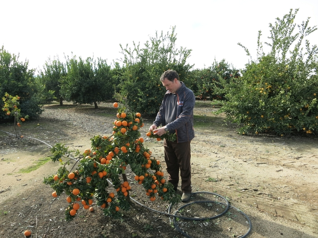 Adrian Buckley examines the Bouquet de Fleurs sour orange