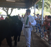 Jake Williams of Smartsville 4-H in the show ring at the Yuba-Sutter Fair