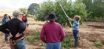 Pruning Demo for SFREC News Blog