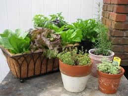 Veggies in Containers