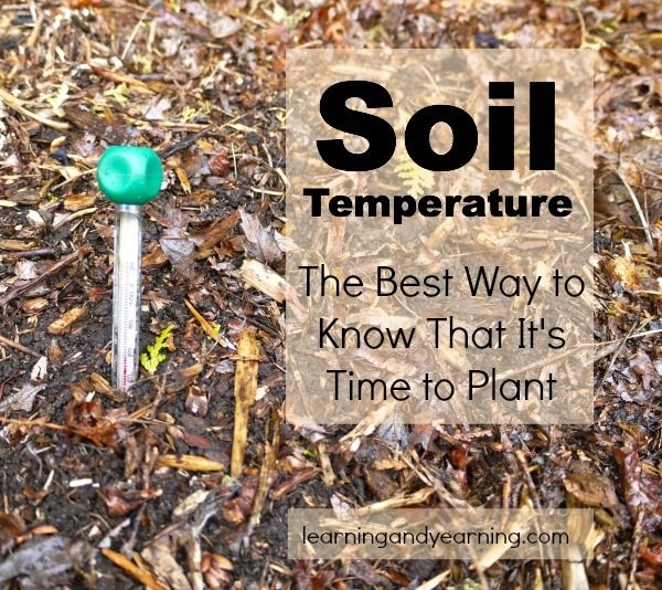 . . . . use a soil thermometer.  Available at nurseries. (Pinterest)