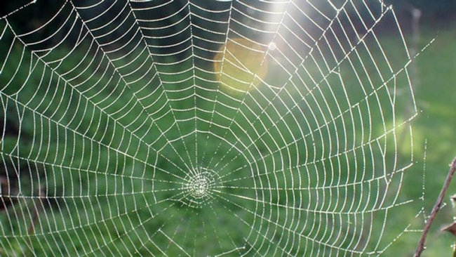 Garden spider web (Homelife)