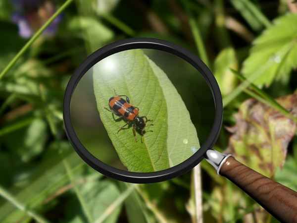 Use a magnifying glass to get all the details. (Planet Science)