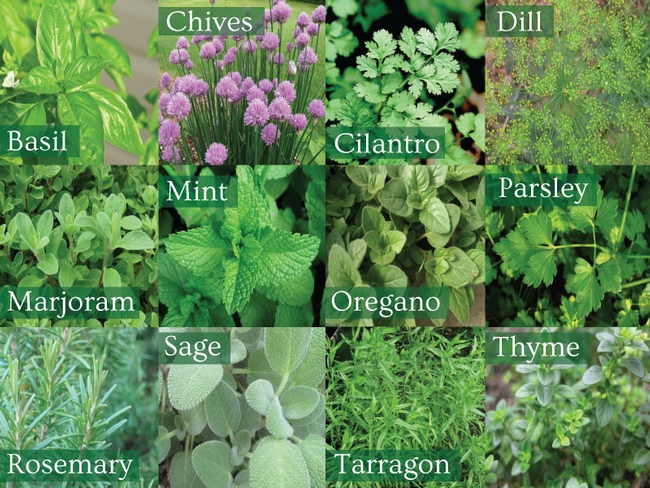 Scented herbs.  Not all take to pinching.  See Denise's article. (Runyon Equipment Rental Blog, WordPress.com)