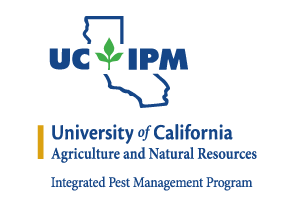Ground squirrels, and find out all about them here:  UC IPM:  http://ipm.ucanr.edu/PMG/PESTNOTES/pn7438.html