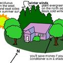 Plant trees around your house (Pinterest)