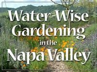 Check out this water wise gardening information from the City of Napa. http://www.napa.watersavingplants.com/  (cityofnapa)