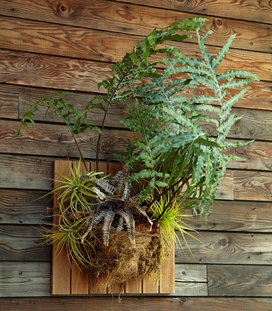 Epiphytes mounted on board (Houzz)