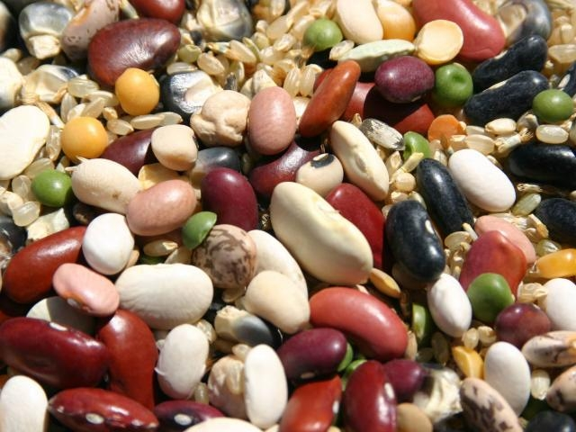 All kinds of beans (UC Davis Plant Sciences)