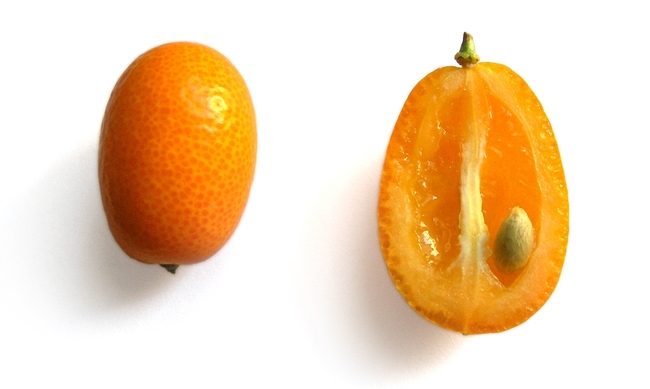 Kumquat; it is really little (UC ANR)