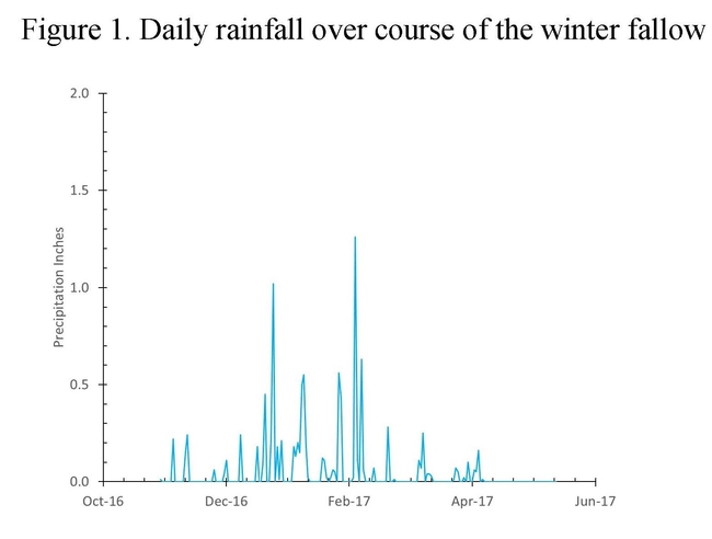 Figure 1. Daily rainfall over course of the winter fallow
