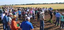 2018 Davis Field Day for UC Small Grains Blog Blog