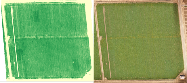 Figure 1. Demonstration site in Solano County on 2/20/20 showing crop N deficiency signal. The three N-rich reference zones appear in the NDRE measurement (on the left) but are not visible to the naked eye (RGB image on the right).
