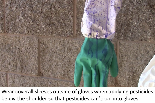 Coverall sleeves worn outside of gloves to prevent pesticides from running into gloves.