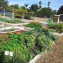 The Grow Lab provides a hands-on laboratory for UC Master Gardener trainees and a venue for UC Master Gardeners to educate the public on innovative vegetable gardening techniques in Riverside County.
