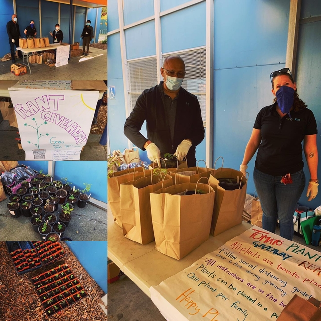 County Director Frank McPherson and UC Cal Fresh Rep, haley Kerr wearing masks next to bags of plants and a hand made signh that says plant giveaway.
