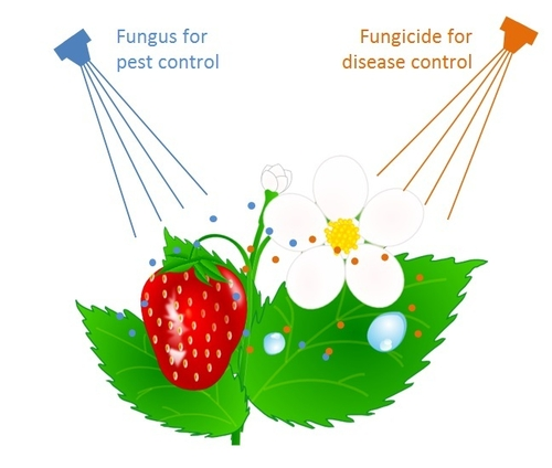 Fungicide Bb compatibility drawing