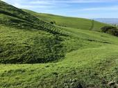 Lush green hillside in Mission Pea Regional Preserve (Spring 2017)