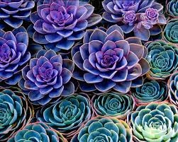 Water-wise and beautiful, succulents are a great addition to any home garden!