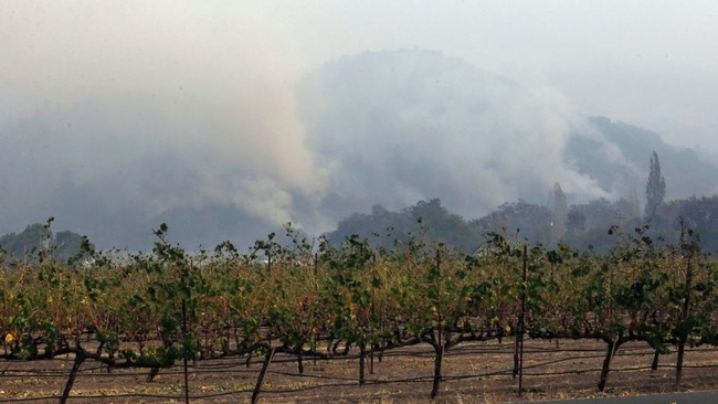 Crops exposed to smoke from fire near Chateau St Jean, AP Photo by Jeff Chiu