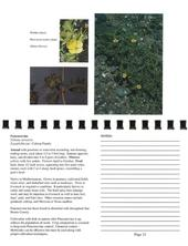 Puncturevine Page from Selected Invasive Weeds of San Benito County: A Field Identification Guide