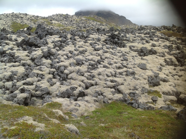 lots of grey moss