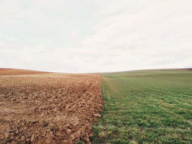 Field. Photo credit: Elizabeth Lies on Unsplash
