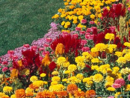 Flowers, Summer Annuals